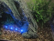 LED Blue Nightline 11 cm (Mondlicht)