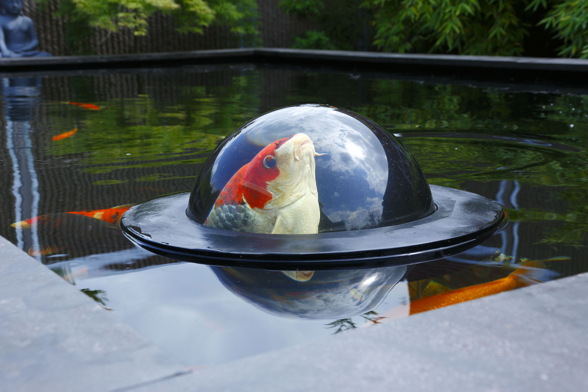 Velda Floating Fish Dome Beobachtung